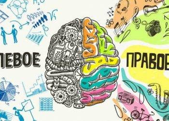 Левая часть мозга отвечает за медленные движения, а правая за быстрые