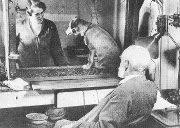 Эксперименты над живыми существами: границы дозволенного