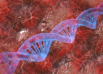 Мутации в ДНК оказались связаны с продолжительностью жизни