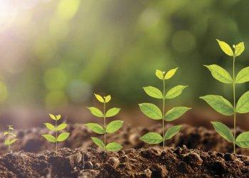 Нанопластик способен существовать не только в воде, но и в почве и растениях