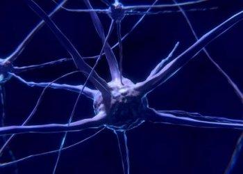 Открыт новый класс белков, защищающий синапсы от гибели
