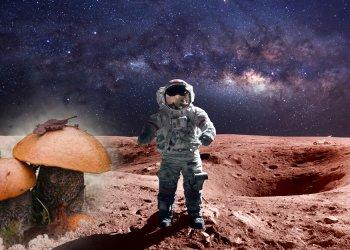 Грибы защитят космонавтов от радиации