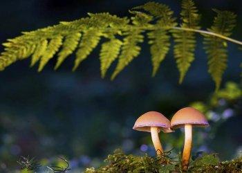 Исследователи - неврологи нашли в растительном галлюциногене лекарство от ряда болезней