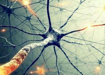 Исследователи создали чернила, управляющие ростом нейронов