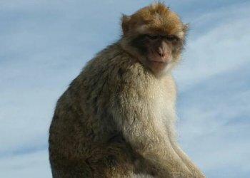 Генную терапию для борьбы с инсультами успешно испытали на обезьянах