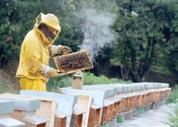 В яде медоносных пчел возможно скрыто спасение от определенных видов рака, уверены онкологи