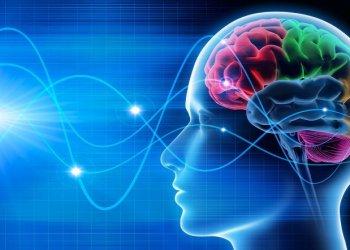 Выдвинута новая теория источника сознания у человека