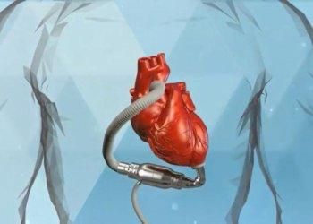 Исследователи продвинулись в создании искусственных органов