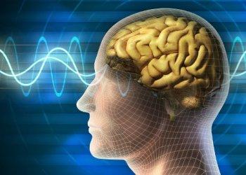 Ученые - неврологи нашли объяснение механизму формирования долговременной памяти
