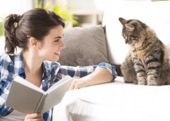 Кошки помогут в лечении хронической болезни почек человека?