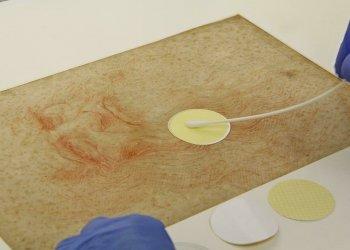 Микробиом рисунков Леонардо да Винчи